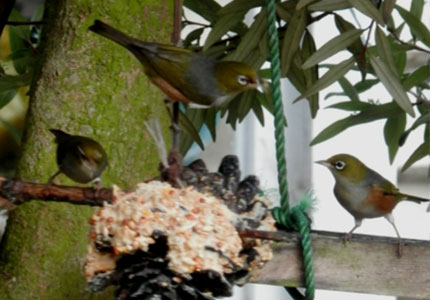 lady may birds within1